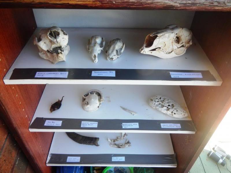 Kai's bone museum photo KaiMuseum.jpg