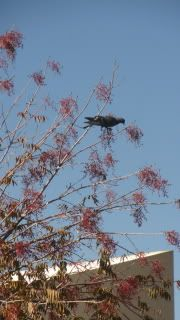 bird up in small branches