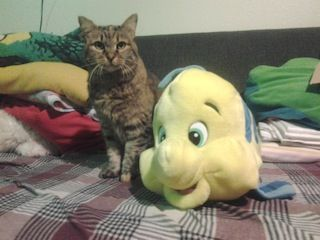 a cat and a flounder doll, on the bed.jpg