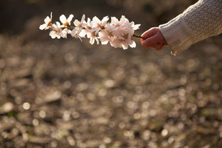 child's hand holding small branch with blossoms