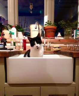 black and white cat in a deep kitchen sink