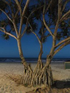 trees on a beach at night, roots showing