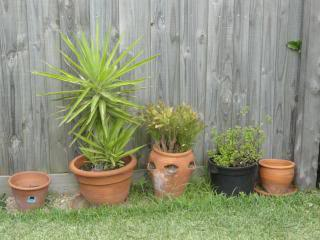 plants in clay pots next to a board fence
