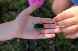 child's hand with a beetle, another child reaching to touch it
