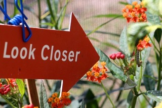 sign shaped like an arrow that says 'look closer,' pointing at flowers