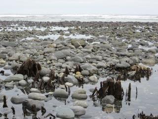 Atlantic shore, rocks
