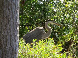 A heron standing in the woods