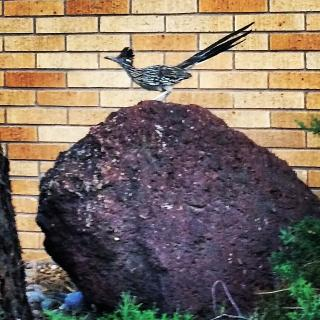 roadrunner on a big laval rock, against a brick wall