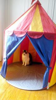 a cat in a child's indoor play tent