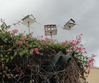 three bird houses on poles, above a porch with flowering vines