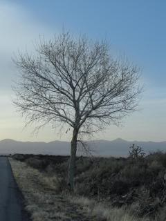 leafless tree by roadside with line of mountains behind