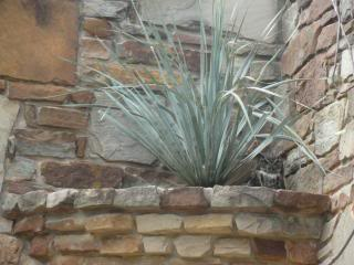 desert plant in a high built-in planter