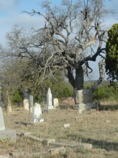 dead tree in an old cemetery