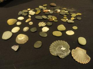 sea shells spread out on a brown table