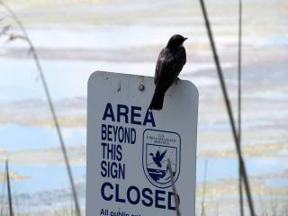 bird perched on an 'area closed' sign