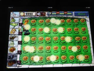 plants vs zombies with a full yard of sunflowers